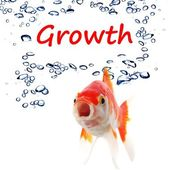 Business growth or success concept with goldfish — Stock Photo