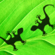 Green jungle leaf and gecko - Foto de Stock