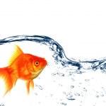 Goldfish — Stock Photo #4245566