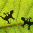Green jungle leaf and gecko - Foto Stock