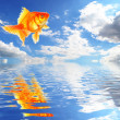 Blue sky and goldfish — Stock Photo