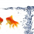 Goldfish — Stock Photo #4308456