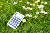 Ecological accounting — Stock Photo