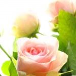 Flowers — Stock Photo #4354990