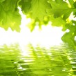 Stock Photo: Green leave and water