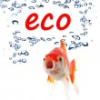 Eco — Stock Photo