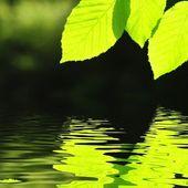 Groene zomer bladeren — Stockfoto
