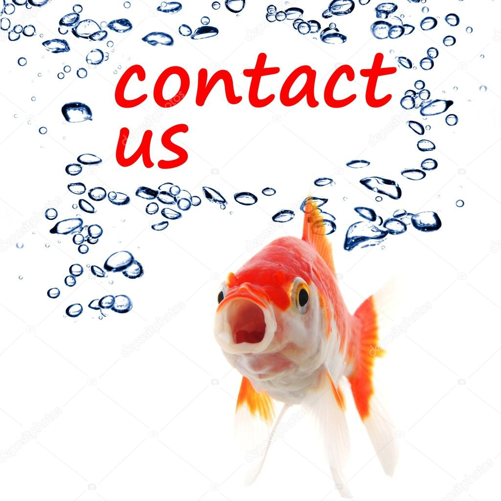 Contact us concept with goldfish showing support service or email communication — Stock Photo #4356431