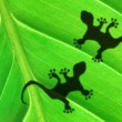 Gecko shadow on leaf — Stock Photo