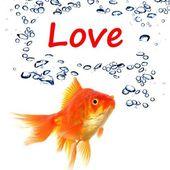 Amor peixe — Foto Stock
