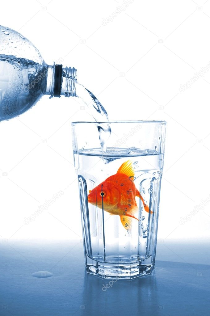 Goldfish in glass of water showing challenge or creativity concept — Stock Photo #4558326