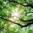 Stock Photo: Sunlight pass through tree