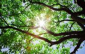 Sunlight pass through the tree — Stock Photo