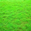 Green grass texture — Stock Photo #2988775