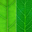 4 different green leaf close-up — Stock Photo