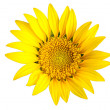 Bright yellow sun flower isolated - Stock Photo