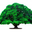 Green old tree - Stock Photo