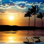 Beautiful sunet with palm tree — Stock Photo