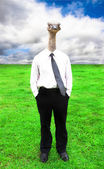 Businessman with Ostrich head — Stock Photo