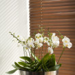 Stock Photo: Flowers on windowsill