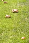 Pumpkin on the lawn — Stock Photo
