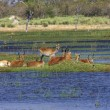 Okavango delta - Stock Photo