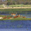 Stock Photo: Okavango delta