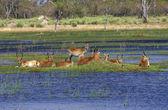 Okavango delta — Stock Photo