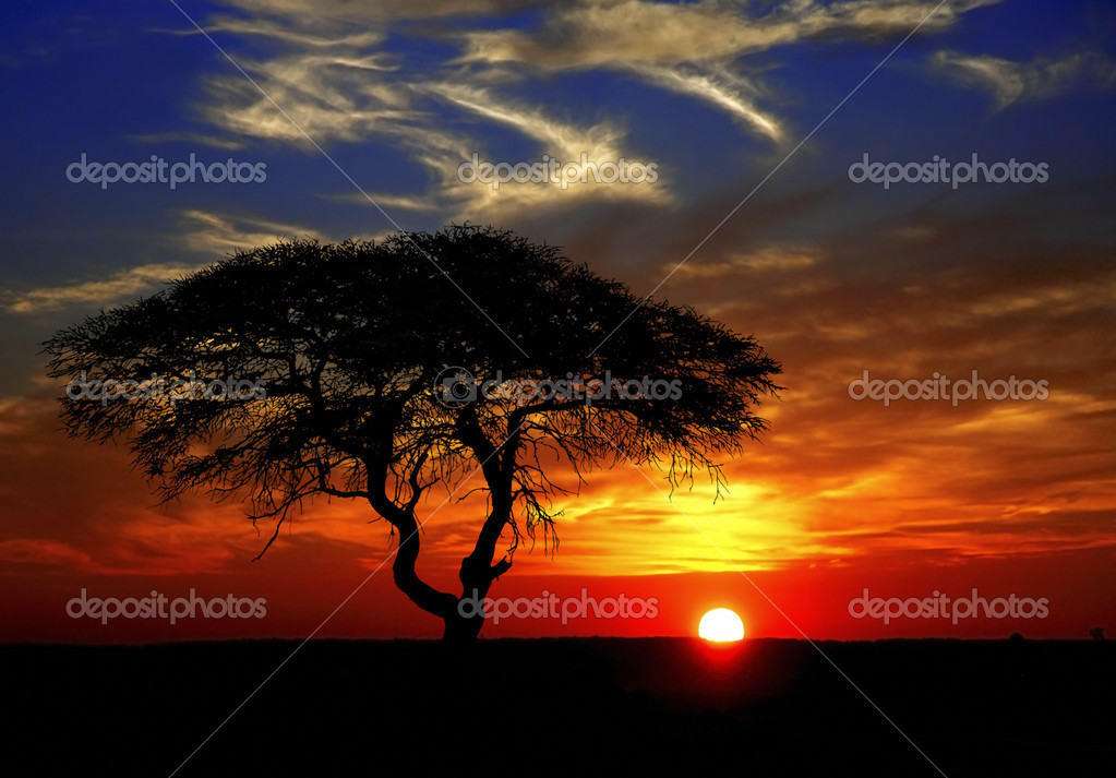 Beautiful african sunset with silhouetted acacia tree (Namibia)  Stock Photo #3619844