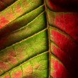 Multicolor leaf with texture — Stock Photo