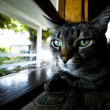 An indoor cat sitting on the window cell yearning to be outside — Stock Photo