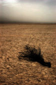 Large field of baked earth after a long drought — Stock Photo