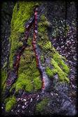 árvore coberto de musgo — Foto Stock