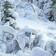 Winter lanscape / snow forest — Stock Photo