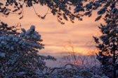 Winter sunrise lanscape — Stock Photo