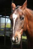 Portrét mladé koně — Stock fotografie
