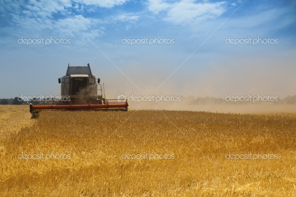 Harvest time / A combine harvester working in a wheat field — Stock Photo #3537275