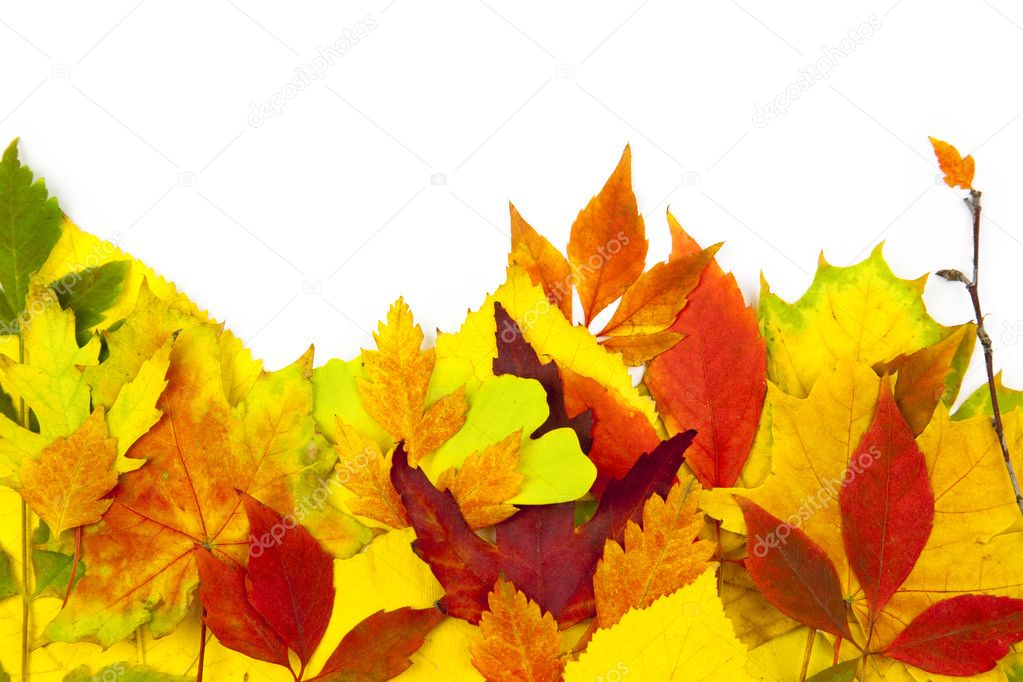 Autumn frame / beautiful real leaves / isolated on white — Stock Photo #3601548