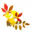 Autumn frame corner / beautiful real leaves / isolated on white — Stock Photo #3625414