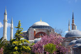 Hagia sofia w stambule, turcja — Zdjęcie stockowe