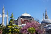 圣索非亚大教堂索菲亚在伊斯坦布尔,土耳其 — 图库照片