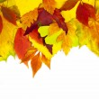 Autumn frame / beautiful real leaves / isolated on white — Stock Photo