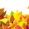 Autumn frame / beautiful real leaves / isolated on white - Stock Photo