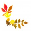 Autumn frame corner / beautiful real leaves / isolated on white — Stock Photo #3792633