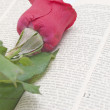 Rose on bible — Stock Photo #2984290