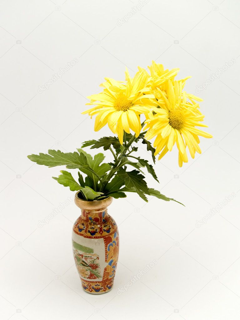 Yellow daisies — Stock Photo #3013540