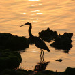 Heron sihlouette - Stock Photo