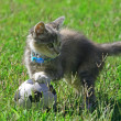 Kitten with a ball — Stock Photo