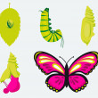 Royalty-Free Stock Vector Image: Metamorphose-Verwandlung Raupe in Schmetterling