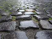 Wet from rain Flemish Belgian cobble stone — Stock Photo